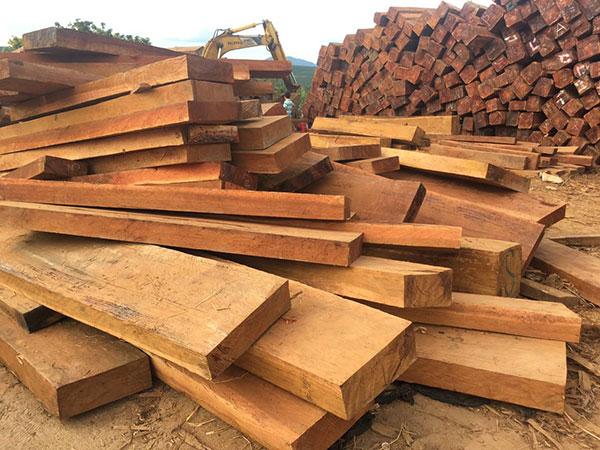 Hình ảnh gỗ gụ Nam Phi