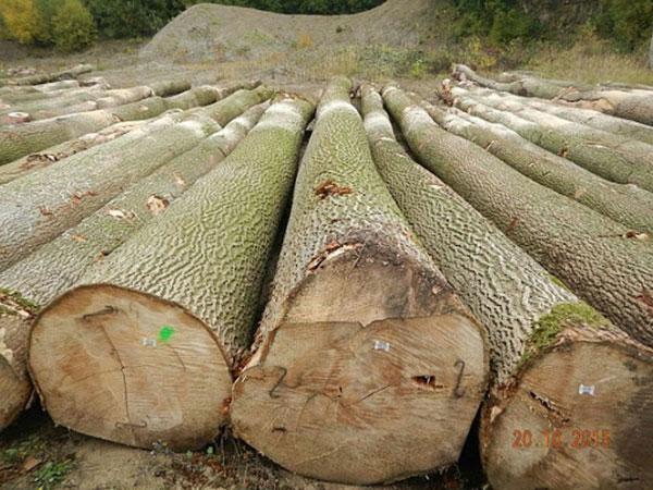 Sản phẩm từ gỗ tần bì có thể gia công làm nhiều vật dụng nội thất trong gia đình